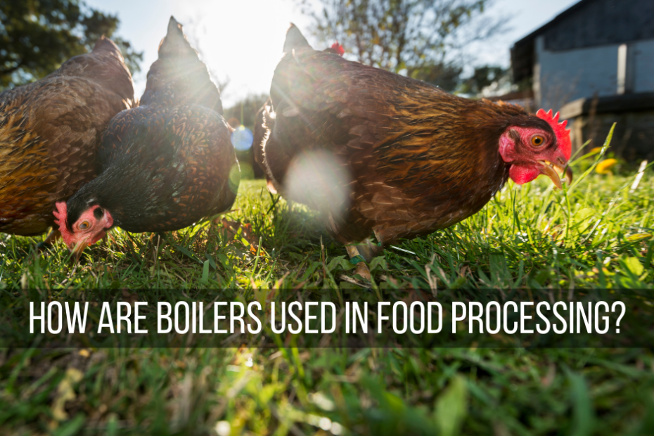 How Are Boilers Used In Food Processing?